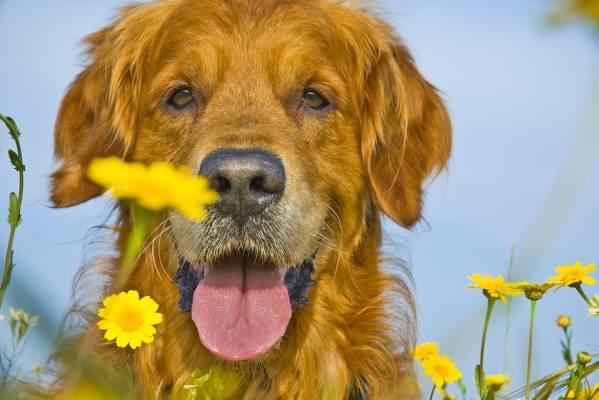 Ежедневный уход за шерстью собак - это важно