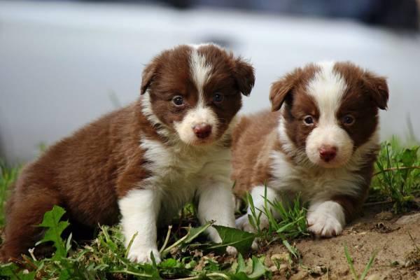 Жизненный цикл собаки - новорождённые щенки