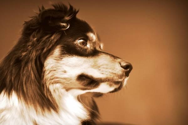 Болезни глаз, ушей и пасти собак