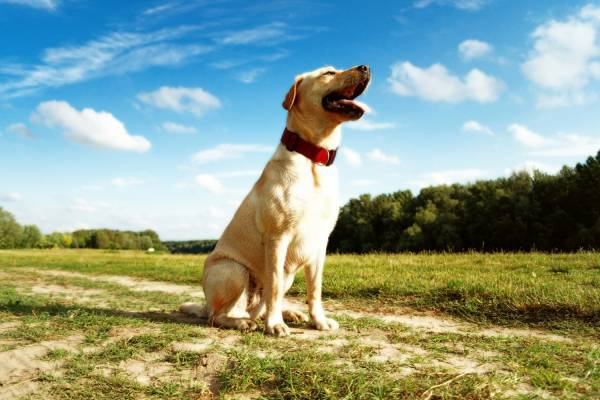 Необходимое оборудование для ухода за собакой