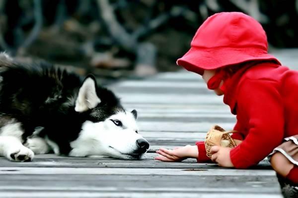 Условия содержания собак