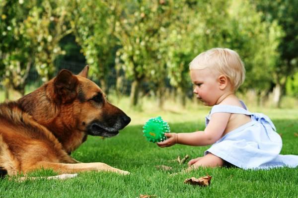 Собаки и дети что должны знать родители