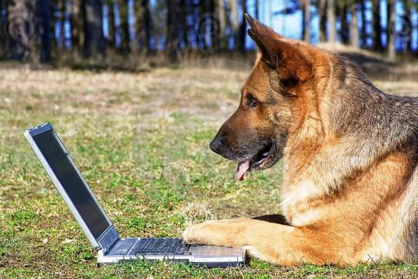 Очень умное животное - собака