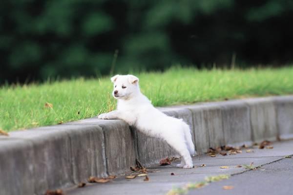 Жизненный цикл собаки - щенки от рождения до трёх месяцев