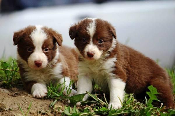 Жизненный цикл собаки от трех месяцев до четырех лет