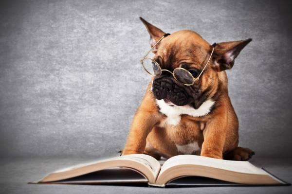 Лига самых умных пород собак