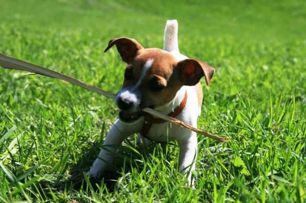 Обучение щенка основным командам на начальном этапе дрессировки