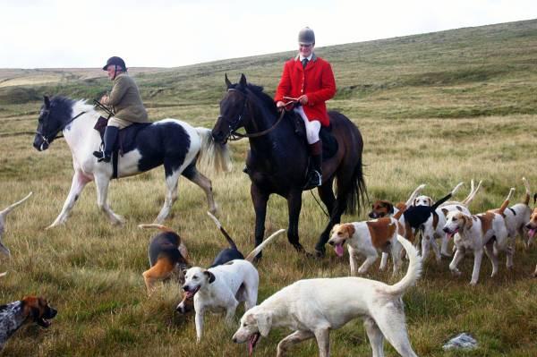 Охотничьи гончие собаки