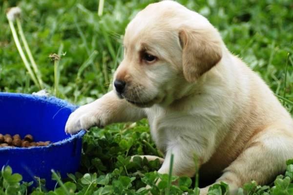 Собаки с проблемами пищеварительной системы