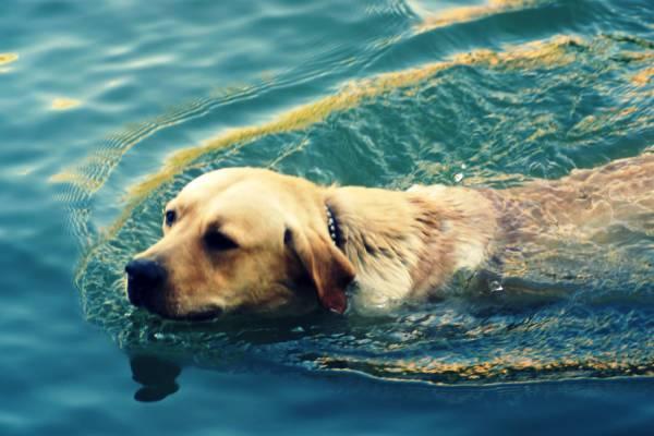 Приручение собаки к воде