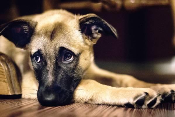 Лишай домашних животных