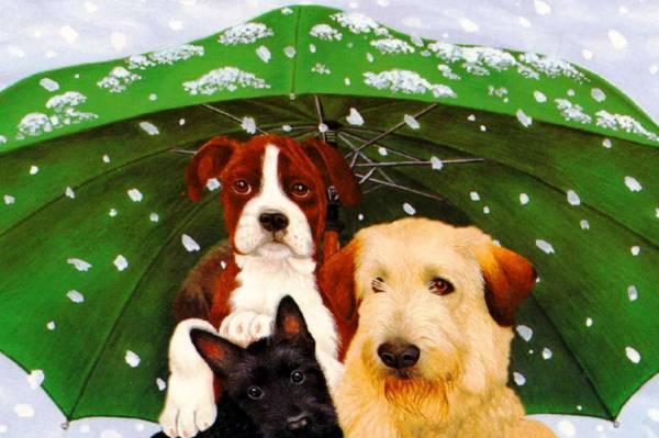 Забота о собаках