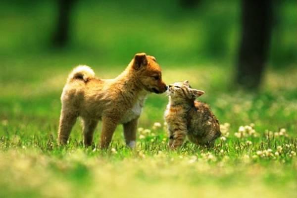 Кого выбрать кошку или собаку?