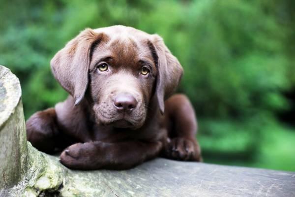 Что нужно знать владельцу, который хочет обучить свою собаку команде